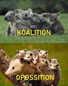 Koala Funny Funny Koala meme The post a - Koala Funny - Koala Funny Funny Koala meme The post appeared first on Gag Dad. The post Koala Funny Funny Koala meme The post a appeared first on Gag Dad. Koala Meme, Funny Koala, Funny Cats, Funny Animal Videos, Animal Memes, Funny Animals, Cute Animals, Funny Sports Pictures, Funny Meme Pictures