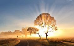 Wschód, Słońca, Mgła, Droga, Drzewa