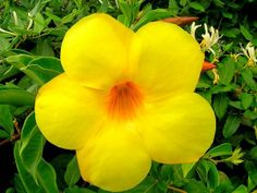 http://s3.amazonaws.com/sagebudphotos/ALLAM/Bright_yellow_flower_600.jpg