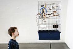 Espoolainen 7-vuotias Konsta Muurinen seurasi kiinnostuneena häkkilintujen elämää Nykytaiteen museossa Kiasmassa hiihtolomalla. Katso lisää saman kuvaajan parhaita töitä klikkaamalla kuvaa. Kuva: Outi Pyhäranta / HS