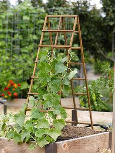 Kitchen Garden Trellis from Gardener's Supply .. vertical gardening is a great way to save space and keep the produce off the ground reducing diseases and rot