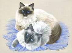 Ragdoll-Life-Together-Cat-Print-by-I-Garmashova