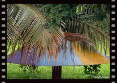 Sri Lanka - à l'ombre des palmiers... http://www.lulu.com/shop/isabelle-escapade/mistoulin-et-mistouline-au-sri-lanka/ebook/product-21303793.html