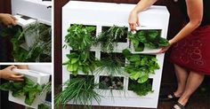 Striking home farming concepts to grow your own food | Hometone : A Complete guide to home improvement, Home teechnology and Home Decor.