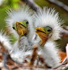 I don't know exactly what kind of birds these babies are, but they look like a cross between a dandelion and a pistachio. <3