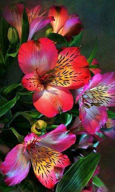 .Alstromeria (devotion)  This is my favorite flower.