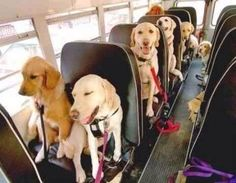 I want to be on this school bus