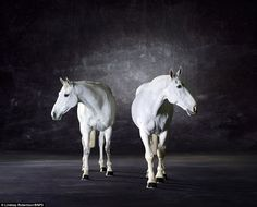 Something about black and white photography of horses