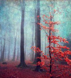 Photography by Dirk Wuestenhagen