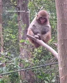 Tag a friend and don't say anything 🐵😂 - Katzen Cute Wild Animals, Jungle Animals, Cute Funny Animals, Funny Cute, Animals And Pets, Cute Dogs, Cute Animal Videos, Funny Animal Pictures, Beautiful Creatures