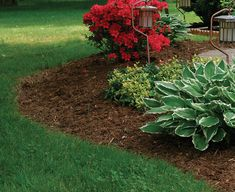 Keep mulch away from your house. placed against the foundation provides an entrance way for ants and other insects to get into the house. Be sure to keep a space between the foundation and the mulch. Low Maintenance Landscaping, Landscaping Tips, Front Yard Landscaping, Hillside Landscaping, Landscape Maintenance, Succulent Landscaping, Farmhouse Landscaping, Garden Mulch, Lawn And Garden
