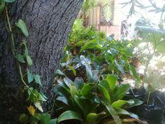 +plantas