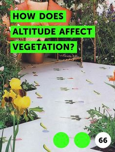 How Does Altitude Affect Vegetation?. Elevation plays a large role in the health and growth of plants. Elevation may affect the type and amount of sunlight that plants receive, the amount of water that plants can absorb and the nutrients that are available in the soil. As a result, certain plants grow very well in high elevations, whereas others...