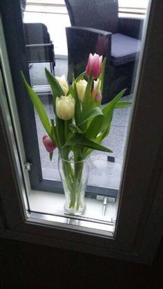 Kolme viikkoa sitten laitoin tulppaanit maljakkoon ja ikkunan väliin. Edelleen kauniita. Eikä allergisoi.