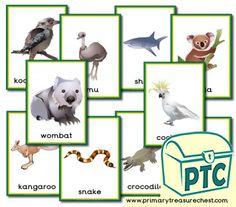 Australian Animals themed resources for the classroom Animal Activities, Teaching Activities, Toddler Activities, Teachers Aide, Australian Animals, Animal 2, Wombat, Help Teaching, Treasure Chest
