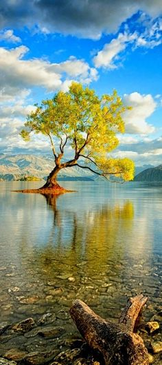 This is the most photographed tree in New Zealand. Lake Wanaka, South Island. Bill Gibson-Patmore. (curation & caption: @BillGP). Bill✔️