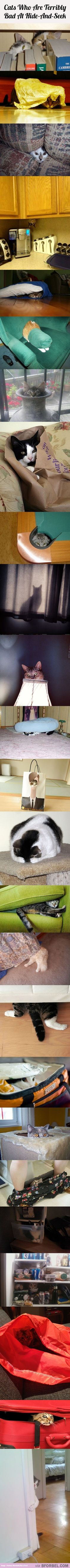 25 Cats Who Are Terribly Bad At Hide-And-Seek…