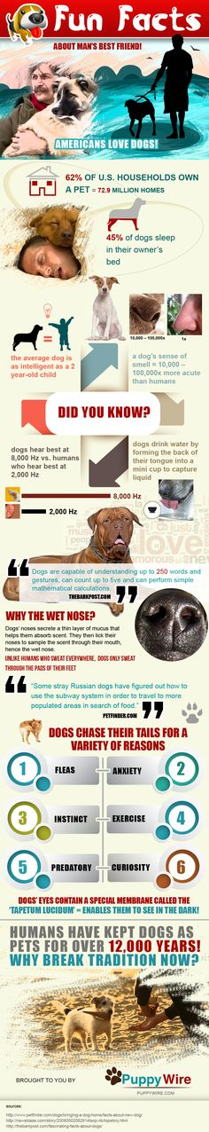 http://www.puppywire.com/fun-facts-about-mans-best-friend/  Fun Facts About Man's Best Friend [Infographic]