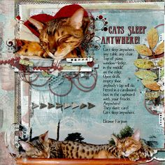 """Cats sleep anywhere <br /> Credits <br /> Never give up elements by Kawouette <br /> <a rel=""""nofollow"""" href=""""https://www.pickleberrypop.com/shop/product.php?productid=42100&page=1"""" target=""""_blank"""">https://www.pickleberrypop.com/shop/product.php?productid=42100&page=1</a><br /> Never give up stacked papers by Kawouette<br /> <a rel=""""nofollow"""" href=""""https://www.pickleberrypop.com/shop/product.php?productid=42113&page=1""""…"""