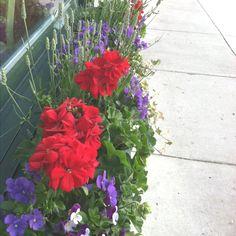 Summer flower box idea