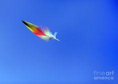 rainbow lorikeet feather - Google Search