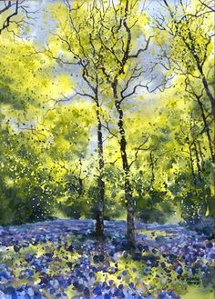 BLUEBELLS & SILVER BIRCH - AD250