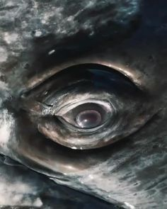 Nature Aesthetic, Aesthetic Videos, Beautiful Sea Creatures, Save Our Oceans, Gray Whale, Nature Gif, Underwater World, Sea World, Nature Wallpaper