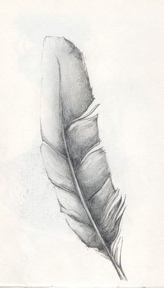 Feather Sketch by JANunnoArt on DeviantArt
