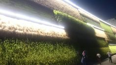 Grass Wall on Expo