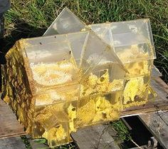 6 Sides to Every Story  Artist Aganetha Dyck~ Plexiglass Bee Skep