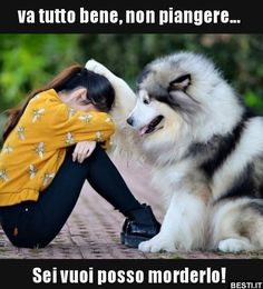 Ideas for funny animals husky dogs Cute Baby Animals, Animals And Pets, Funny Animals, Cute Puppies, Cute Dogs, Dogs And Puppies, Doggies, Funny Dog Pictures, I Love Dogs