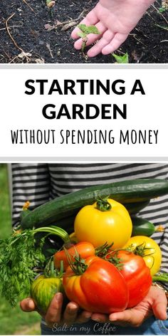 Want to start a big garden, but can hardly spend a dime? I KNOW that frustration! These tips can help you start even a huge garden, without spending money. garden Money-Saving Garden Tips Big Garden, Garden Care, Organic Farming, Organic Gardening, Gardening For Beginners, Gardening Tips, Starting A Vegetable Garden, Living Off The Land, Square Foot Gardening