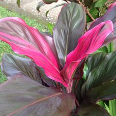 More beautiful tropical plants