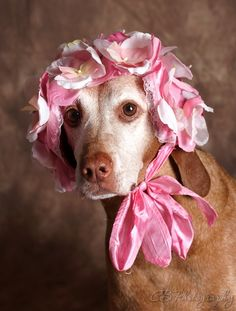 In my Easter Bonnet with all the frills upon it ...