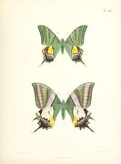 vol. 5 - Lepidoptera indica. - Biodiversity Heritage Library