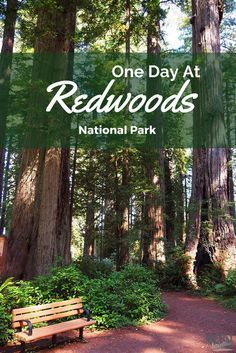 A day trip for exploring the Redwoods National Park. Can this be enough time?