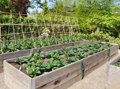 warzywa na podwyższonej grządce fot. alisonhancock - Fotolia