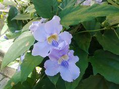 Amazing blue flower