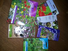 Seasoning Mixes, Lime, Herbs, English, Seasons, Garden, Flowers, Cinderella, Lima