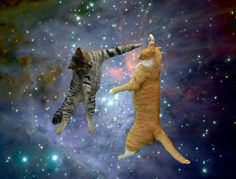 kitties moving plate glass window in space