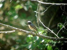 Snap of Birding Tour.