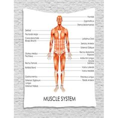 ANATOMY OF THE HUMAN EYE POSTER ANATOMICAL CHART BODY  16/'/'x13/'/'inch 01