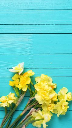 New ideas for wallpaper yellow phone flower Frühling Wallpaper, Flower Background Wallpaper, Spring Wallpaper, Cute Wallpaper Backgrounds, Pretty Wallpapers, Trendy Wallpaper, Flower Backgrounds, Colorful Wallpaper, Cellphone Wallpaper
