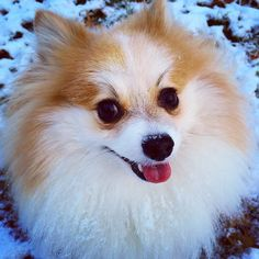 For all dog selfie lovers out there, check this app for taking dog selfies! Selfies, Taking Dog, Dog Selfie, All Dogs, App, Corgi, Lovers, Animals, Check