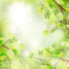 Summer green leaves with sunlight background vector 09