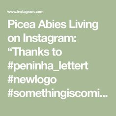 "Picea Abies Living on Instagram: ""Thanks to #peninha_lettert #newlogo #somethingiscoming #2020vision"""