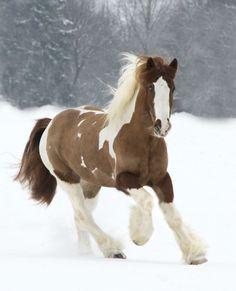 15Breathtakingly Beautiful HorsesThe Tinker Horse