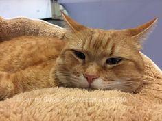 Street Cat Bob, In Memorium, Red Cat, Cat Boarding, Cat Names, Cat Life, Cute Cats, Creatures, Animals