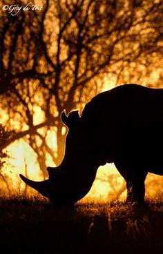 Rhino silhouette by Greg du Toit