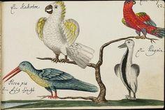 Batavian Travels - GF Müller von Ruffach, 1681 m   Flickr - Fotosharing!
